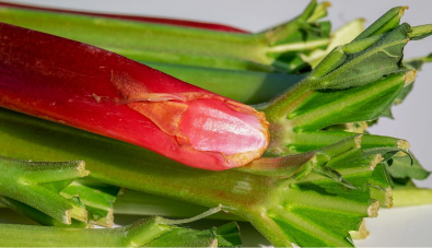 Why Rhubarb Should Be a Part of Your Diet